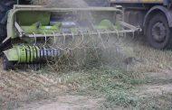 Seceta arde recoltele fermierilor băcăuani (FOTO-VIDEO)